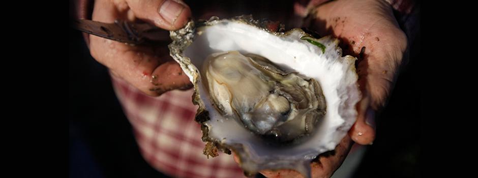 Topkwaliteit in oesters